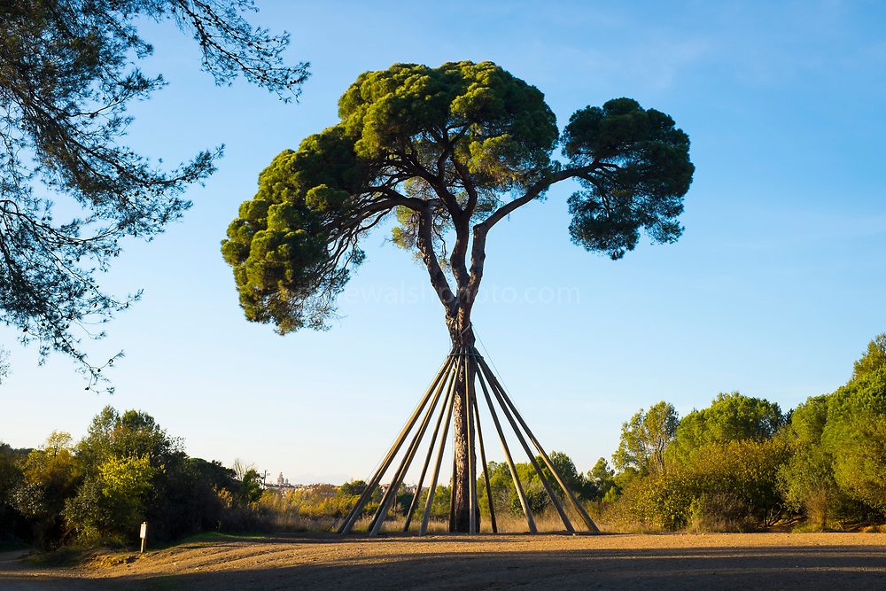 The Pi d'en Xandri is a 230 year old pine tree in Sant Cugat del Valles which serves as a monument to the ongoing struggle to preserve the local environment. Legal disputes and agreements for the last four decades. As a result, the Pi d'en Xandri has been become a symbol of Sant Cugat's identity, including citizen efforts to protect the natural environment of the municipality.