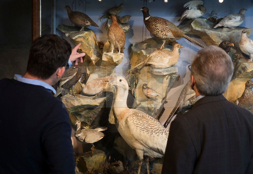 © Licensed to London News Pictures. 17/11/2016. Billingshurst, UK. A case containing British game birds is displayed with other animals at Summers Place Auctions ahead of their sale in their 'Evolution' Auction taking place on November 22, 2016 - which will also see a rare dodo skeleton up for sale.   Photo credit: Peter Macdiarmid/LNP