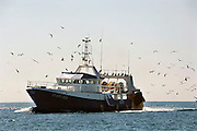 Frankrijk,Sete, 20-9-2008Vissers keren terug naar de haven met gevangen vis uit de middellandse zee. Vissersboot. Meeuwen vliegen er omheen.Fishermen returning to port with fish caught from the Mediterranean Sea. Fishing boat.Fishermen sort caught fish from the Mediterranean sea on the deck of a fishing boat.Foto: Flip Franssen/Hollandse Hoogte