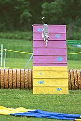 Dog Coming Down Test Ramp