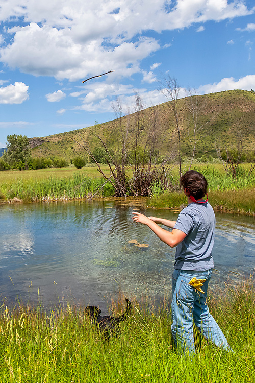 Water retrieve of a fly stick for boy and black labrador retrieve in pond near the South Fork of Snake River in Eastern Idaho. Licensing and Open Edition Prints.