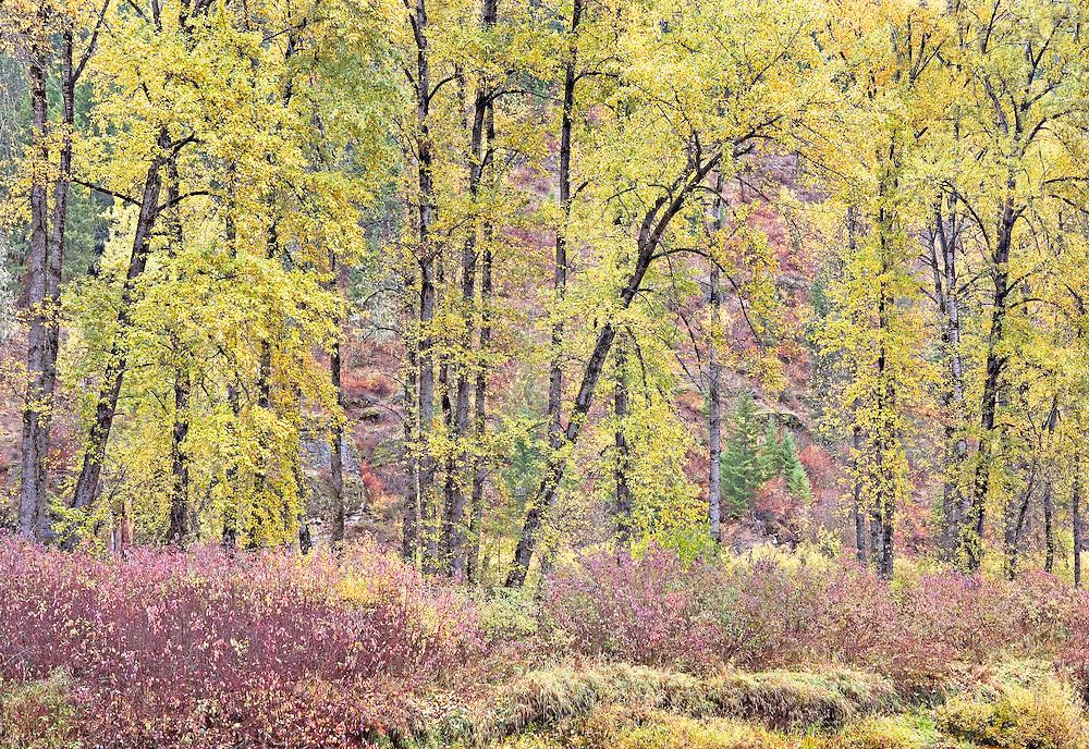 autumn along Coeur d'alene River Idaho