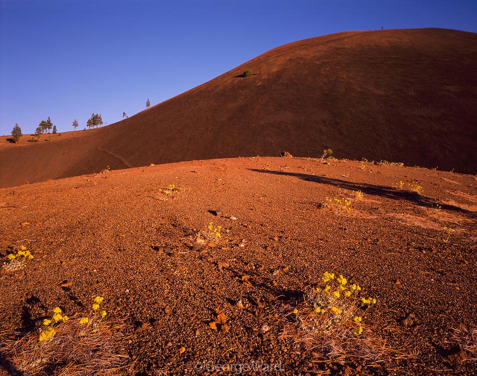 Cinder Cone and Sulphur Flower, Lassen Volcanic National Park, California