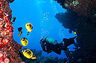 Swim Through, First Cathedral, Lanai Hawaii