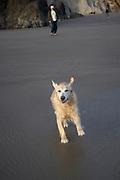 Happy dog at the beach