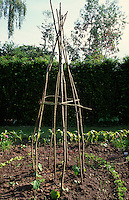 frame for growing beans or peas