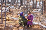 A Tsaatan boy and his grandmother with their resting herd of reindeer (Rangifer tarandus), Khovsgol Province, Mongolia
