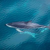 New Zealand Marine Life
