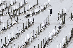 © Licensed to London News Pictures. 18/03/2018. Dorking, UK. A runner braves the weather at Denbies Vineyard after overnight snow and freezing temperatures. Amber weather warnings remain in place for parts of the UK for a second day. Photo credit: Peter Macdiarmid/LNP
