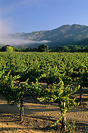 Vineyards in the McDowell Valley, near Hopland, Mendocino County, California