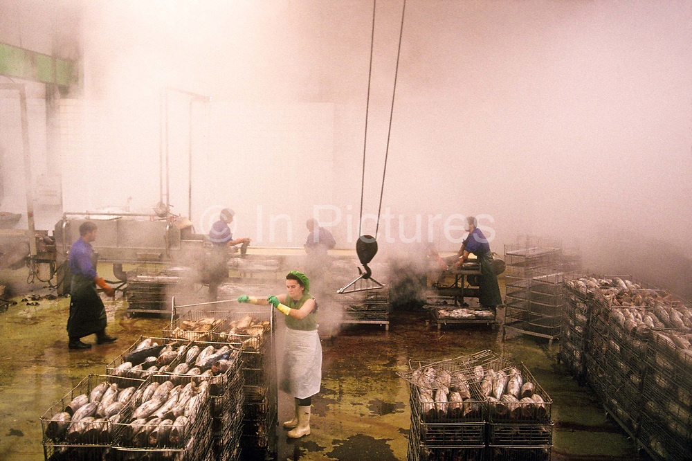 Women and men on the production line of Escuris Tuna processing factory place and remove Tuna fish from large cooking vats, Puebla del Carminal, Galicia, Spain.
