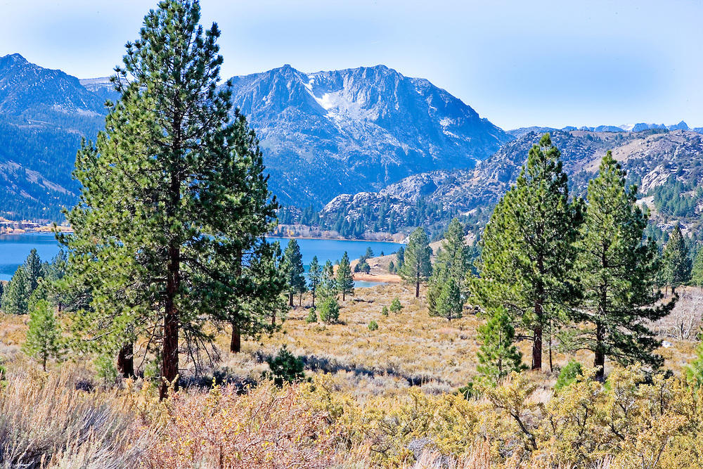 Autumn Afternoon in High Desert Above June Lake, California