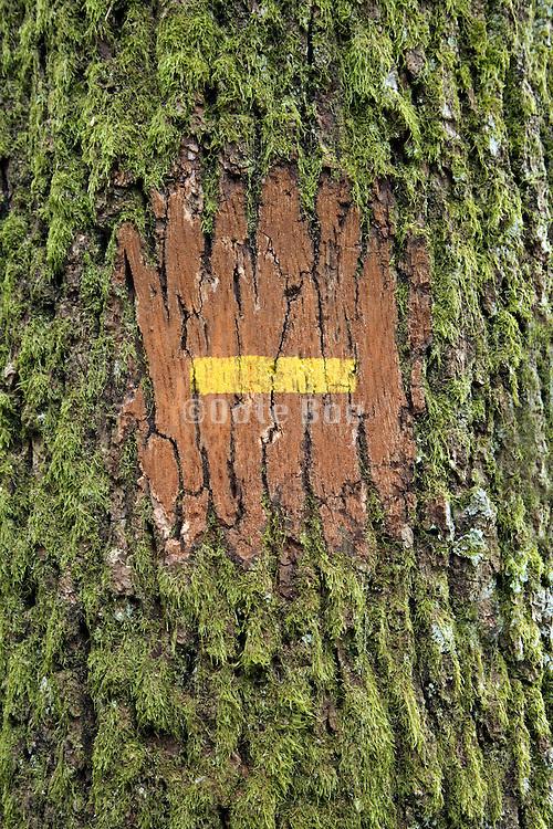 close up of a rambling path sign
