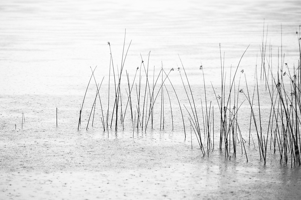 Cudgen Lake during a summer shower, Cudgen Nature Reserve.