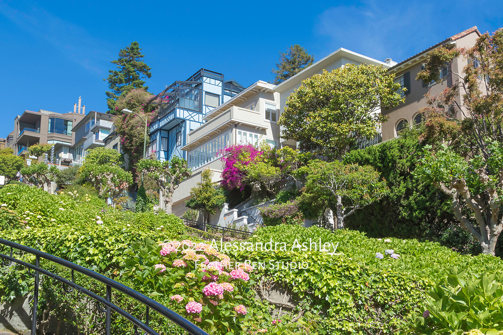 San  Francisco's Lombard Street hydrangea gardens and adjacent homes, viewed from the base of the hill.