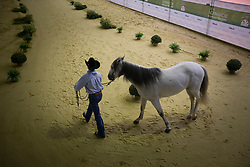 Paulo Koury Neto, (BRA), Dont Whiz WRB - Horse Inspection Reining  - Alltech FEI World Equestrian Games™ 2014 - Normandy, France.<br /> © Hippo Foto Team - Dirk Caremans<br /> 25/06/14