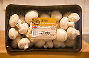 Plastic film wrapped packet container Tesco closed cup mushrooms close up, UK