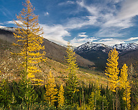 Deep in the Bitterroot Mountains of Idaho, the larch trees were turning to gold in late October. The snow capped peak in the distance is Beaver Ridge.