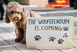 "© Licensed to London News Pictures. 07/10/2018. London, UK. Molly poses with a sign saying 'The Wooferendum is Coming' as pro-remain dog owners march to Parliament to demand a ""People's Vote"" on the final Brexit agreement.  Photo credit: Peter Macdiarmid/LNP"