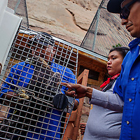 Zoo employees Leonardo Charlie, left, Leomi Foster and Lionel Tsosie load a golden eagle into a transport crate so that it can be moved to a new enclosure Friday at the Navajo Nation Zoo in Window Rock.