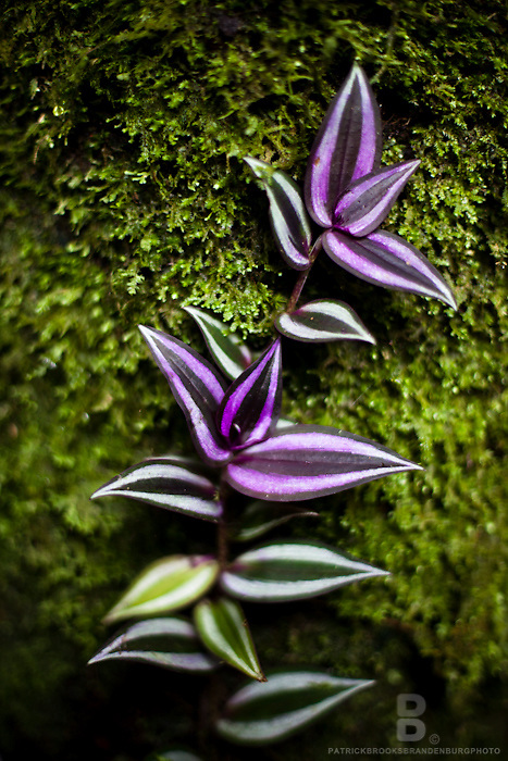 Green and purple leafs grow along a mossy tree, photograhed with a close-up macro lens.