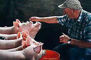 Jay Hagen pets his pigs after hauling water to them from his other barn across Lowell Larimer Road in Snohomish on Thursday, August 14, 2014.  The Cross Valley Water District recently shut off the water to the buildings on his property south of Lowell Larimer Road.  Hagen is fighting with the water district about installing another water meter for those buildings, which would cost him more than $11,000.  He now has to haul water to his animals four times a day.