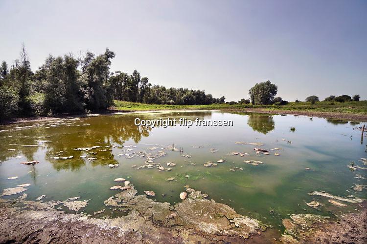 Nederland, Ooij, 23-6-2020  In een opdrogende waterpoel liggen toentallen vissen die zijn gestorven wegens zuurstoftekort. De poel vukt zich tijdens hoogwater van de rivier de Waal, Rijn, waardoor de vissen opgesloten komen te zitten als het water weer zakt en bij laagwater . De poel wordt door wilde runderen en paarden gebruikt als drinkplaats, maar door de vele dode vissen stinkt het en is de waterkwaliteit niet meer optimaal.   rivierengebied, rivierenland, uiterwaarden, rivierenlandschap, rivierlandschap  .  Uiteindelijk zal de plas droogvallen . Foto: Flip Franssen