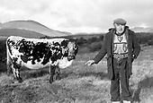 Big Bertha world's oldest cow