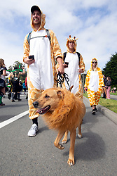 A group of people costumed as giraffes add their dog, dressed as a lion, at the 107th running of the Bay to Breakers, Sunday, May 20, 2018, in San Francisco. (Photo by D. Ross Cameron)