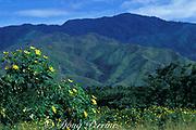 wildflowers and mountains near <br /> Valencia, Venezuela, <br /> South America