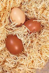 THEMENBILD - braune Hühnereier liegen in einem Nest aus Holzwolle, aufgenommen am 02. März 2018, Kaprun, Österreich // brown chicken eggs lie in a nest of wood wool on 2018/03/02, Kaprun, Austria. EXPA Pictures © 2018, PhotoCredit: EXPA/ Stefanie Oberhauser