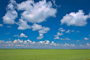 Peas and clouds<br />
