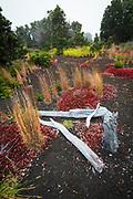 Dead tree and new growth along the Devastation Trail, Hawaii Volcanoes National Park, Hawaii USA