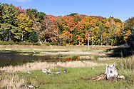 Fall foliage along the shore of Lac Bourgeois at Gatineau Park in Chesea, Québec, Canada. Beaver activity is said to frequently change the water levels here depending on the year.