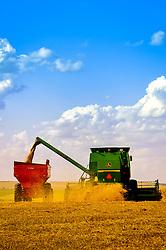 Colheitadeiras trabalhando em lavoura para a colheita do trigo. FOTO: Jefferson Bernardes / Agência Preview