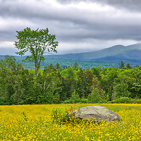 New England photography of the White Mountains and wildflower fields in Sugar Hill, New Hampshire.<br /> <br /> Beautiful New Hampshire fine art photography of blooming wildflowers in Sugar Hill are available as museum quality photography prints, canvas prints, acrylic prints, wood prints or metal prints. Fine art prints may be framed and matted to the individual liking and interior design decorating needs:<br /> <br /> https://juergen-roth.pixels.com/featured/new-hampshire-white-mountains-wildflower-field-juergen-roth.html<br /> <br /> Good light and happy photo making!<br /> <br /> My best,<br /> <br /> Juergen