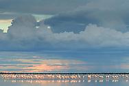 Zwergflamingo (Phoeniconaias minor) bei einem Gewitter über der Sowa Pfanne, Botswana<br /> <br /> Lesser flamingos (Phoeniconaias minor) at a thunderstorm, Sowa pan, Botswana.