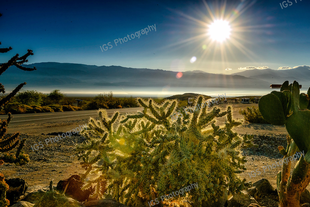 Cholla catus in the early morning sunlight of Panamint Springs, Death Valley National Park