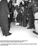 Gatecrashing pig arriving at the Vanity Fair Oscar Night Party. ( It was assumed he was the star of Babe. )<br />  Mortons, Los Angeles. 25 March 1996. Film. 96211/17<br /> <br /> © Copyright Photograph by Dafydd Jones<br /> 66 Stockwell Park Rd. London SW9 0DA<br /> Tel 0171 733 0108
