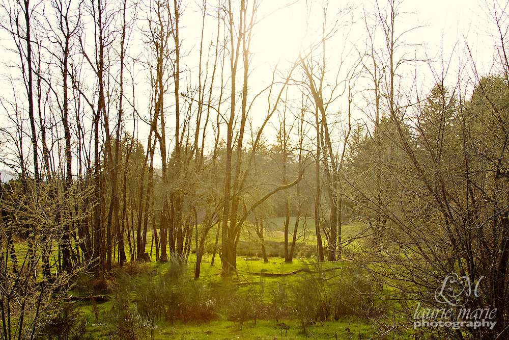 Backlit sunny stand of trees in a meadow