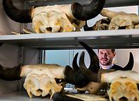 Bialowieza,  woj podlaskie, 14.02.2020. Rafal Kowalczyk profesor IBS PAN. Jest dyrektorem Instytutu Biologii Ssakow Polskiej Akademii Nauk w Bialowiezy. Zajmuje sie badaniami z zakresu ekologii, ekologii behawioralnej oraz ochrony i zarzadzania populacjami zwierzat. Jest tez uznanym fotografem przyrody, czlonkiem ZPFP N/z prof Rafal Kowalczyk pokazuje czaszki zubrow, ktorych IBS w swoich zbiorach ma ponad 1300 szt fot Michal Kosc / AGENCJA WSCHOD