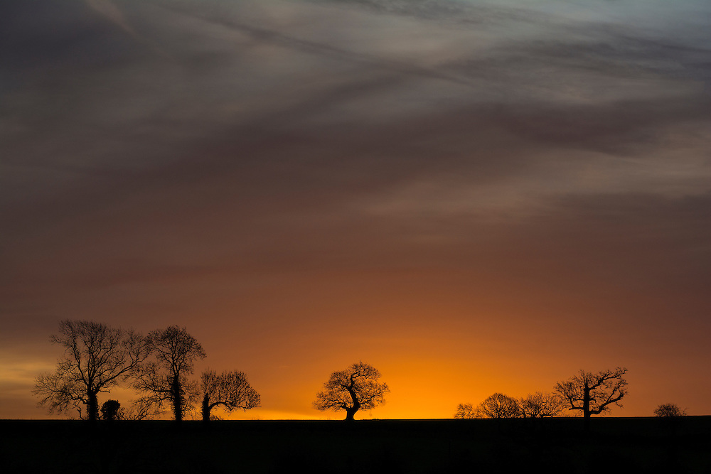 Sun rising behind the trees at Bradgate Park, Leicestershire.