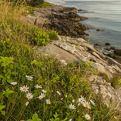 The Nature Conservancy's Lane Island Preserve is a short walk from the harbor in Vinalhaven, Maine.