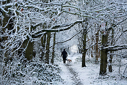 © Licensed to London News Pictures.30/1/2015. Baddersley, Warwickshire. Snow fell in Warwickshire overnight. Pictured, dog walkers out early this morning in Baddersley.<br /> Photo credit : Dave Warren/LNP