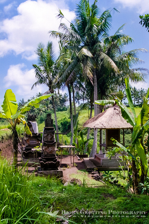 Bali, Gianyar, Bedulu. For a good rice harvest the gods has to be shown proper respect. The rice temple is used once every harvest.