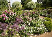 Roses flowering in Wyken Hall gardens, Suffolk, England, UK