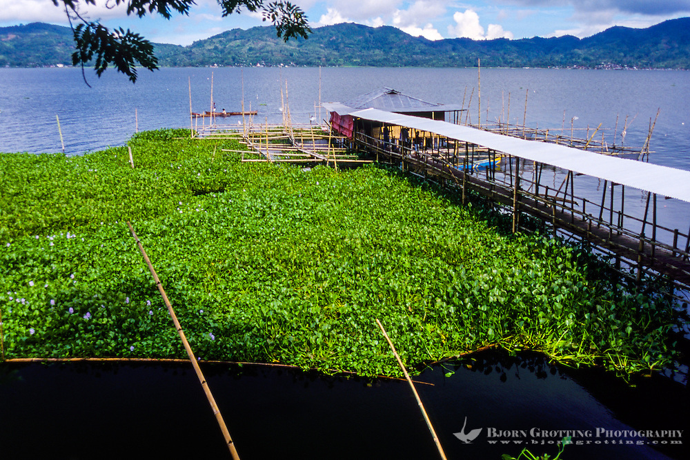 Indonesia, Sulawesi, Tondano. Lake Tondano is a large lake along the side of an ancient volcanic caldera. This house is built on stilts above the water, with a long walkway.