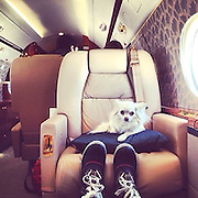 Forget the Rich Kids of Instagram... these are the DOGS who live more luxurious lives than you: New super-rich trend for sharing photos of overly pampered pets<br /> <br /> The super-rich's dogs are often seen as a fashionable accessory to go along with shoes and handbags, but some pets are enjoying with an extravagant existence of their own that is unthinkable to the average person.<br /> The Rich Dogs of Instagram, a new photo account that draws inspiration from the opulence on the Rich Kids of Instagram, shows how having a dog's life isn't always a bad thing.<br /> It displays the wealthy's pampered pooches sunbathing in crystal clear pools, rolling around in wads of cash and flying on private jets.<br /> The dogs probably cannot revel in the jealousy of others the way their masters can, though the canines do seem to be making the most of the high life.<br /> <br /> While the Rich Kids may coast through life using money from their parents, their pets don't even have to worry about paying for anything.<br /> Using the hashtag #rdoi, the account has posted 50 pictures with assorted wealthy dog jokes.<br /> Rich Instagram users' pooches are seen getting ready to do the 'doggy paddle' in indoor mansion pools.<br /> Another dog sat in a mini Audi Spyder says the new car is 'bad to the bone'.  <br /> <br /> A picture of a pooch surrounded by the conquests of a luxury shopping trip is captioned 'throw it in the doggy bag'. <br /> The trust fund puppies probably do not know how good they have it, enjoying luxury vacations and in exotic locations beyond most hardworking humans' wildest dreams.<br /> However, several do a good job of looking smug for the camera, no doubt confident in the fact that they are the 'one percent' of the millions of dogs on the Internet.<br /> Doggies show off their style as their owners dress them up in extravagant designer clothes or add to the animals' natural fur with an expensive, fluffy coat. <br /> <br /> The array of poodles, pugs and chi