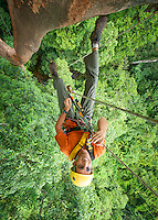 A man climbs a rope into the rainforest canopy, Seram, Indonesia. Adventure photography by Djuna Ivereigh.