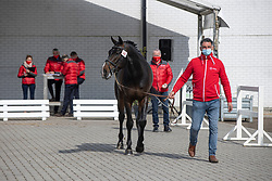 141, Cadarco Z<br /> Hengstenkeuring BWP- Azelhof - Lier  2021<br /> <br /> © Hippo Foto - Dirk Caremans<br /> 12/04/2021